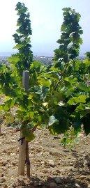 pambos charalambous