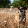 Petspot Dog training Made easy